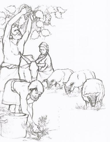 le maitre de lolympe 43